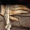 Exploratorii care și-au mâncat colegii și povestea tristă a mumiilor înghețate featured.fw_compressed