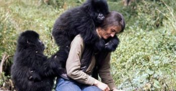 """O crimă neelucidată: Asasinarea lui Dian Fossey, """"regina maimuțelor"""""""