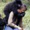 """O crimă neelucidată Asasinarea lui Dian Fossey, """"regina maimuțelor"""" FEATURED.fw_compressed"""