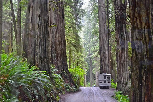 Parcul National Redwood