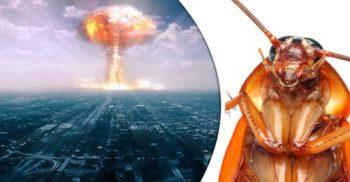 5 ființe de lângă noi care ar supraviețui și unui război nuclear
