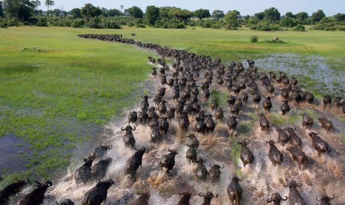 migratiile animalelor