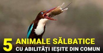 5 animale cu abilități neînțelese și impresionante
