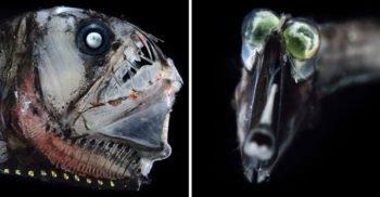 7 imagini cu bizarele creaturi din lumea unde lumina nu pătrunde niciodată