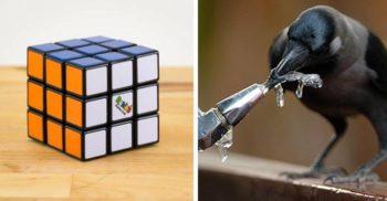 Animale inteligente care fură premiul întâi la testele IQ