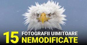 FOTOGRAFII UIMITOARE_compressed