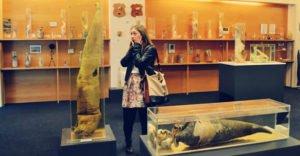 Ai avea curajul sa le vizitezi Top 10 cele mai ciudate muzee din lume