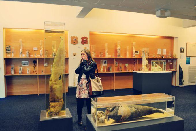 Cele mai ciudate muzee din lume - Muzeul falusurilor