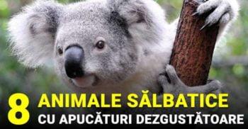 Natura fără maniere: 8 animale sălbatice cu apucături dezgustătoare