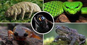 5 animale cu superputeri