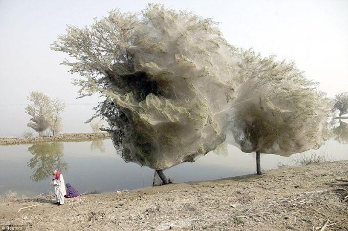 Fenomene naturale - Paianjeni Pakistan