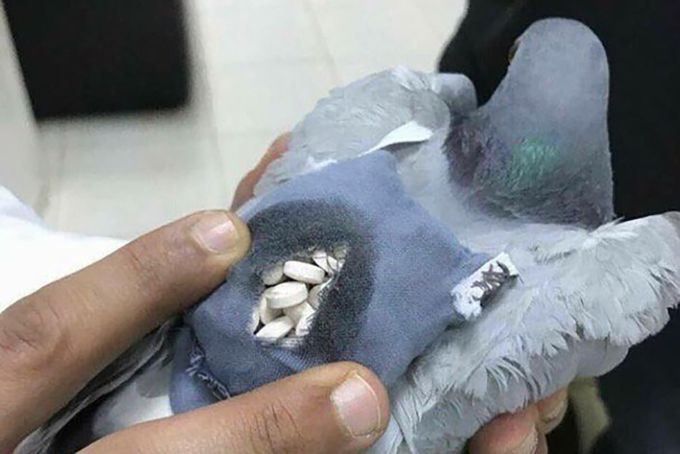 Porumbelul stupefiant - pastile