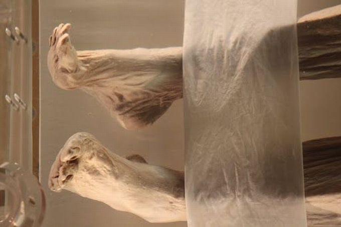 Xin Zhui - mumie 3