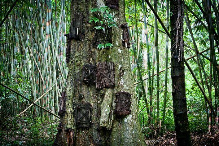 despre moarte - ingropatul in copaci