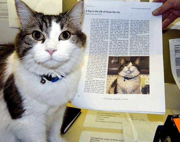 despre moarte - pisica