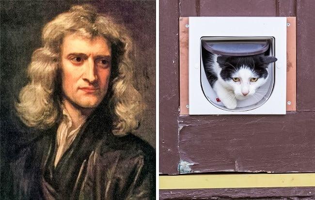 genii newton usita pisici