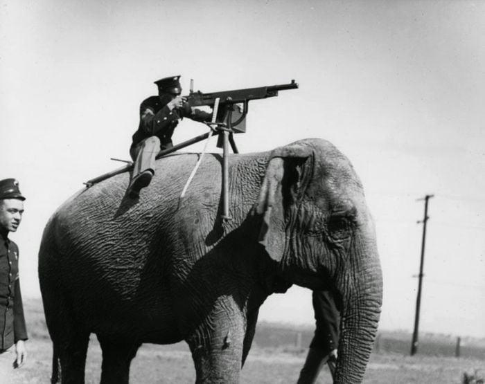 fotografii istorice - mitraliera pe elefant