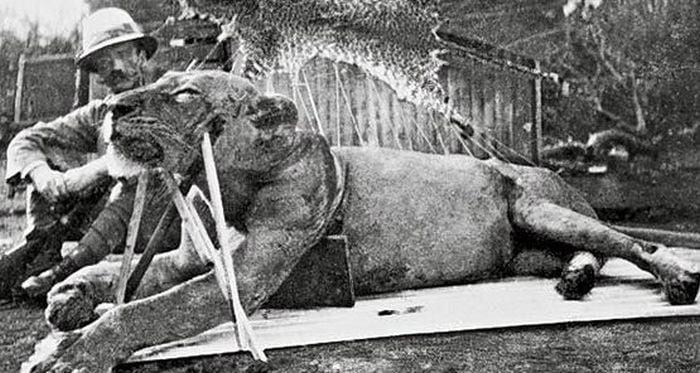 intamplari ciudate - leii din Uganda