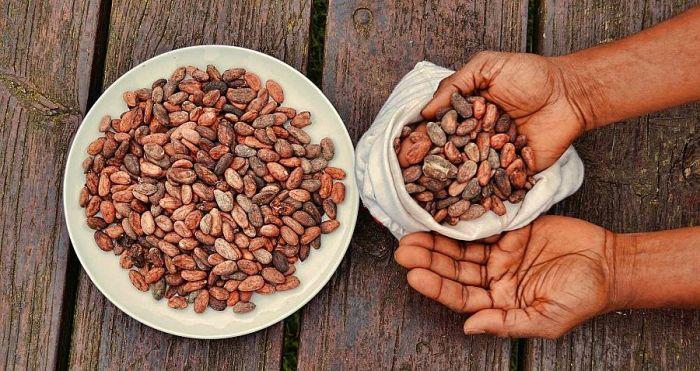 istoria banilor - cacao