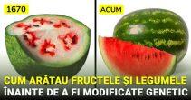 Cum arătau fructele și legumele noastre înainte de a fi modificate genetic