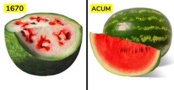 Cum arătau fructele și legumele noastre înainte de a fi modificate prin reproducere selectivă
