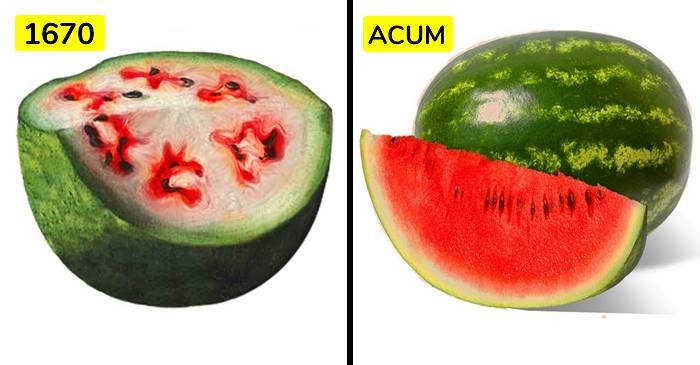 Cum arătau fructele și legumele noastre înainte de a fi modificate genetic FEATURED_compressed