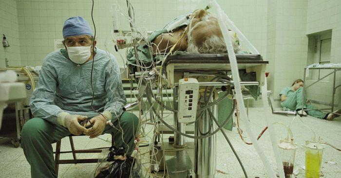 Fotografii - Transplant