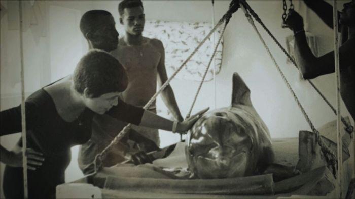 margater lovatt - mutarea delfinului