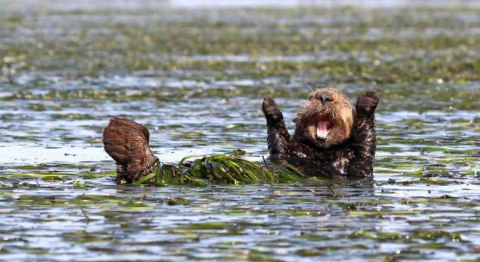 Cele mai amuzante poze cu animale