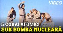 cinci cobai atomici stau sub bomba nucleara_compressed