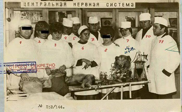 Experimente ciudate - Serghei Brukhonenko