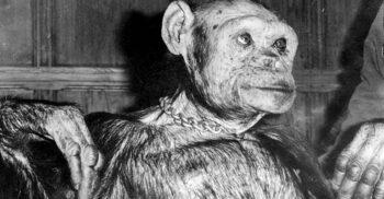 Soldatul hibrid om-maimuță, unul dintre cele mai bizare experimente din secolul XX