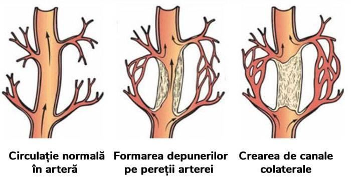 despre corpul uman