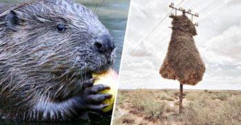 10 structuri uimitoare construite de animale