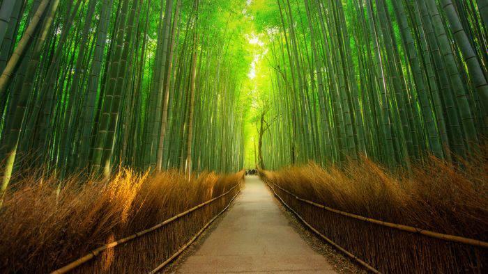 Cele mai frumoase locuri din lume - Padurea Arashiyama
