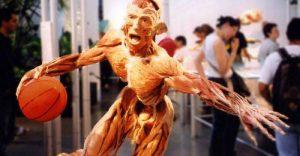 Expozitia corpul uman - baschetbalist