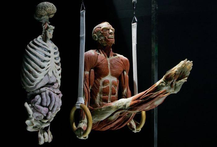 Expozitia corpul uman - gimnast