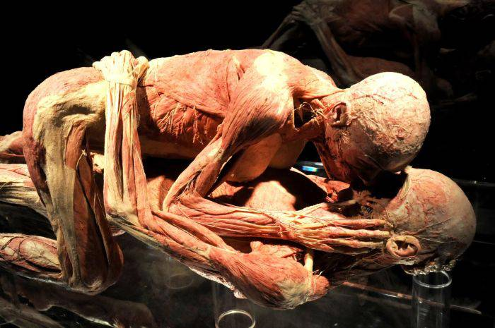 Expozitia corpul uman - imbratisare