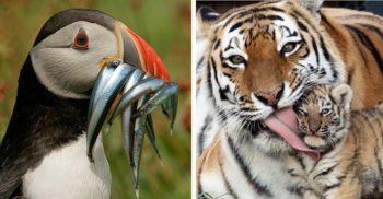 21 de fotografii fascinante care surprind măreția naturii