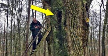 """Agenția matrimonială din pădure – De un secol, Stejarul Mirelui """"face lipeala"""" featured_compressed"""