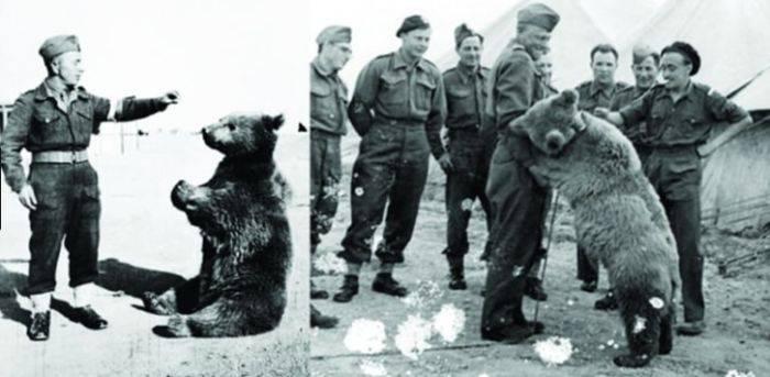 Al doilea razboi mondial - Wojtek