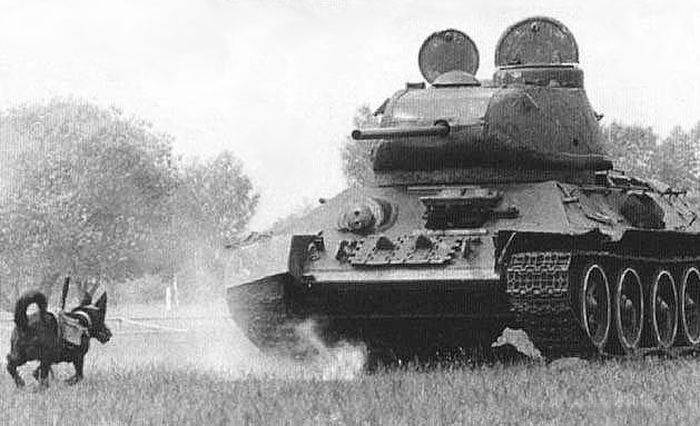 Al doilea razboi mondial - caini antitanc