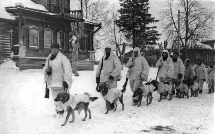 Al doilea razboi mondial - caini sovietici