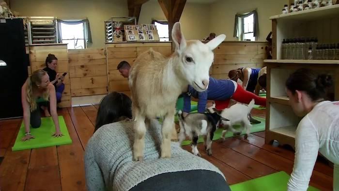 Exercitii fizice - Yoga cu capre