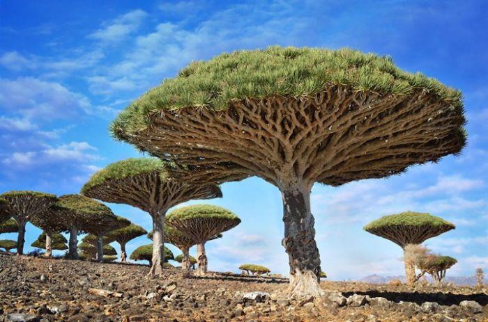 Locuri ciudate - Insula Socotra