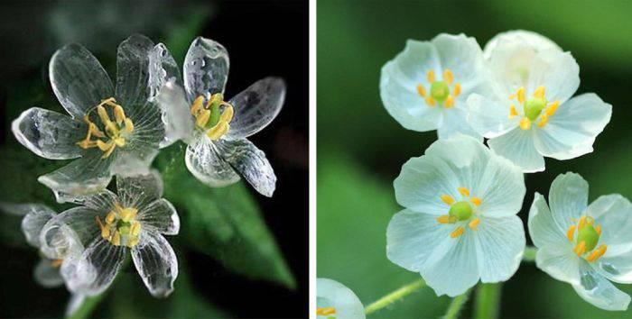 Minuni ale naturii - Flori schelet