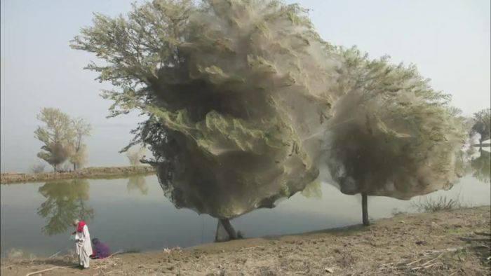 Minuni ale naturii - Panza de paianjen