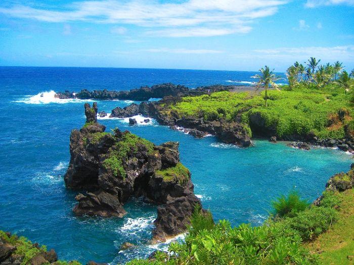 Pesteri marine - Hawaii