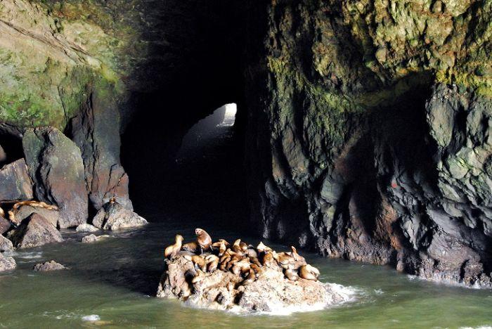 Pesteri marine - Pesteri lei de mare