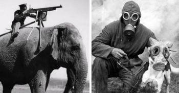 Incredibilele animale-soldat din Al Doilea Război Mondial